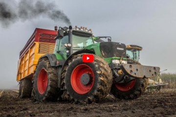 maize silage in the fog